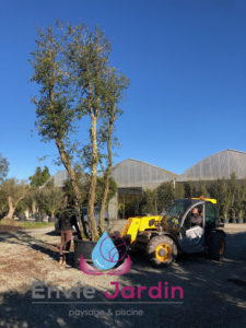 plantation-arbre-56-225x300
