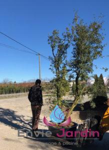 plantation-arbre-561-218x300