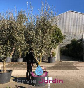 plantation-arbre-562-288x300