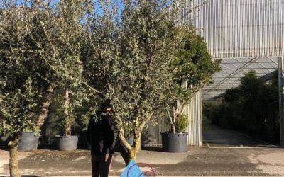 plantation-arbre-562-400x250